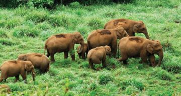 THEKKADY TOUR FROM COCHIN 2 NIGHTS AND 3 DAYS