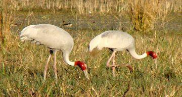 BHARATPUR WEEKEND TOUR 2 NIGHTS AND 3 DAYS