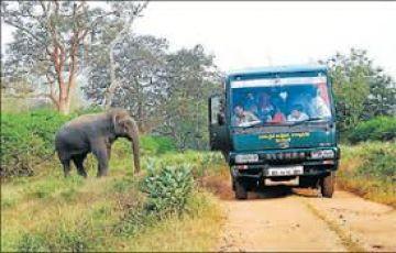 TPJ-93 Short Escape to Bandipur National Park