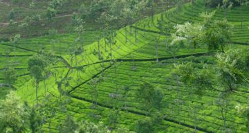 YERCAUD WEEKEND TOUR PACKAGE 2 NIGHTS AND 3 DAYS