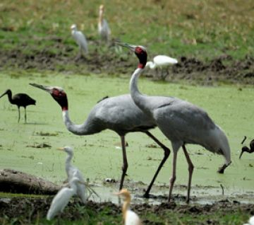 BHARATPUR GOVERNMENT MUSEUM TOUR PACKAGE 2 NIGHTS AND 3 DAYS