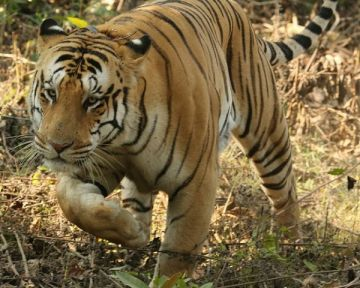 JUNGLE SAFARI TOUR PACKAGE 1 NIGHTS AND 2 DAYS