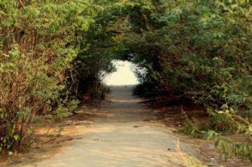 A COLORFUL TRIP FOR BAKKHALI