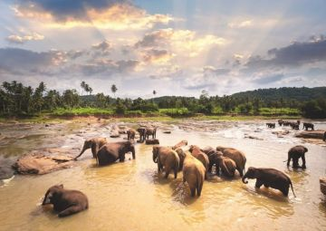 4 NIGHTS/ 5 DAYS IN SRILANKA