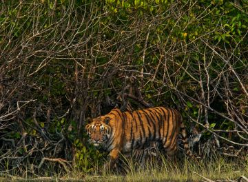 PLACES TO VISIT IN EAST INDIA SUNDARBANS