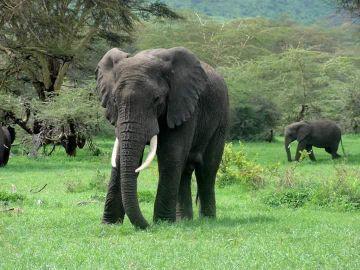 12 Day Tanzania Safari during Wildebeest Migration July 2019