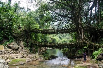 VISIT CHERRAPUNJI TREAD ON LIVING ROOT BRIDGES