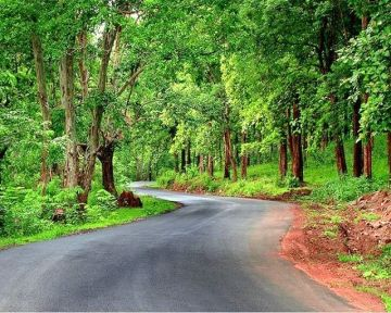 DRIVE THROUGH FOREST OF BANDIPUR