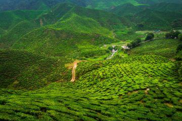INCREDIBLE PLACES TO VISIT IN INDIA BEFORE YOU DIE DARJEELIN