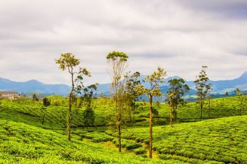 BEST HILL STATIONS TOUR PACKAGE IN VALPARAI