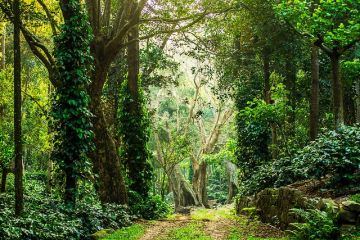 BEST HILL STATIONS TOUR PACKAGE IN YERCAUD