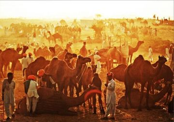 BE A PART OF THE FAMOUS BIKANER CAMEL FESTIVAL