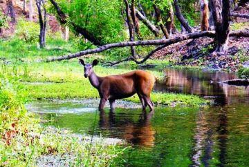 BEST WILDLIFE EXPERIENCE IN BANDHAVGARH NATIONAL PARK