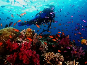 ANDAMAN FROM THE PERFECT SUNSETS TO THE THRILLS OF SCUBA DIVING ANDAMAN HAS IT ALL