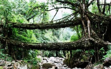 CHERRAPUNJI THE LAND OF LIVING ROOT BRIDGES