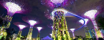 Singapore Delight