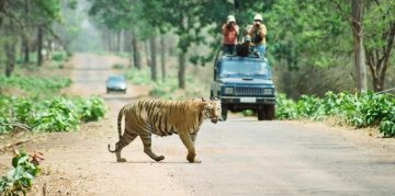 TADOBA RESERVE NATIONAL PARKS AND WILDLIFE SANCTUARIES
