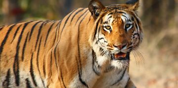 PANNA RESERVE NATIONAL PARKS AND WILDLIFE SANCTUARIES
