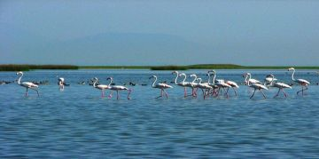 CHILKA RESERVE NATIONAL PARKS AND WILDLIFE SANCTUARIES