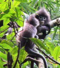 SRIMANGAL Tea Garden & Lawachhara Rain Forest
