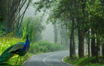 Mysore, Ooty, Wayanad
