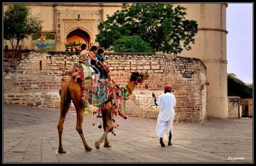Tour To Rajasthan