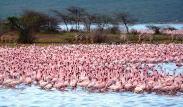 3 Days Lake Elementaita Safari Rift Valley, Kenya