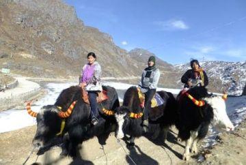 TPJ - 229 Darjeeling lachung gangtok tour