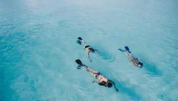 Maldives With Dolphin Watching