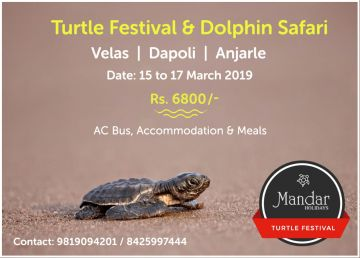 Turtle Festival and Dolphin Safari Velas Dapoli