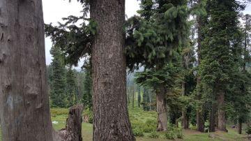 Kashmir with Gurez Tour Package 8 Days
