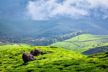 Experience Hills and Spice garden