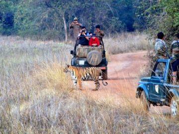 Tadoba National Park  Tour
