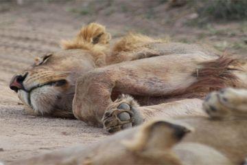 2 Days Safari Ngorongoro Crater / Lake Manyara National Park