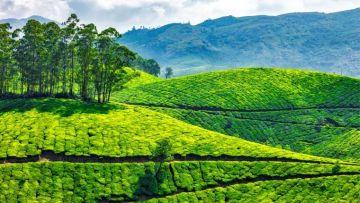 Economy - Magical Kerala