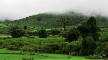 THE GREEN PEACE OF ORISSA