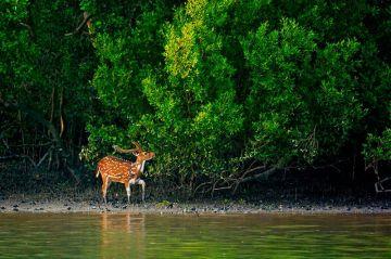 Mangroves Sarrounding - Sundarban 03 Night / 04 Days