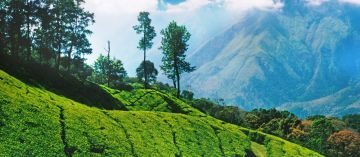 Mesmerizing Mysore Ooty package from Bangalore