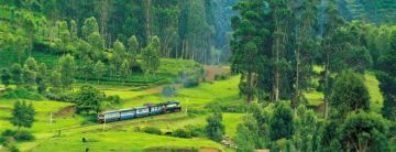 Mysore with Ooty