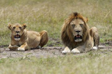 8 Day Kenya Luxury Scenic Safari