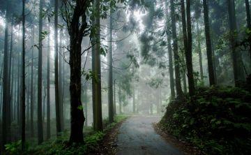 Splendid Nature and Wildlife Lava Loleygaon & Darjeeling