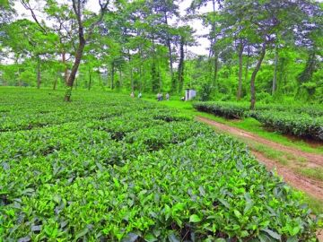 Ever Greenly place in  Jorhat & Dibrugarh
