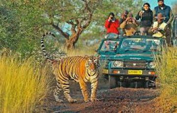 Wildlife Of Rajasthan Tour