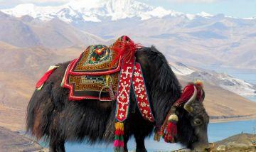 Luxury Gangtok 2 Nights, Darjeeling 2 Nights - TL501 - Premium Pacakge