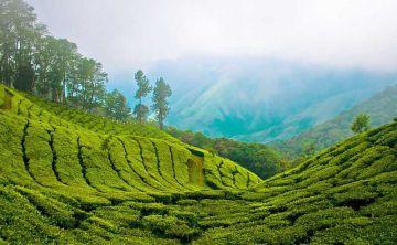 Kerala 7 NIghts And 8 Days