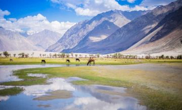 6 Days Leh Nubra Pangong  Best Tour Packages