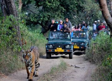 3 Days Jaipur Ranthambhore Tour Package