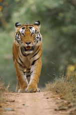 1 Night Bandhavgarh 1 Night Jabalpur Budget Package