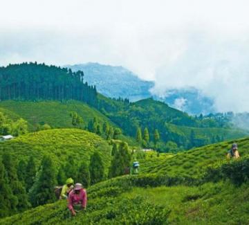 Scenic Darjeeling Honeymoon Package For 5N/6D