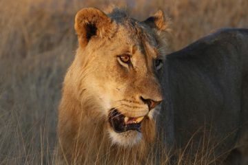 KRUGER NATIONAL PARK TO CAPE TOWN